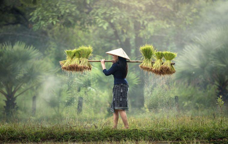 Farm lands of Vietnam